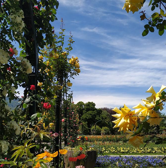 fioriture_roseto-pallavicino