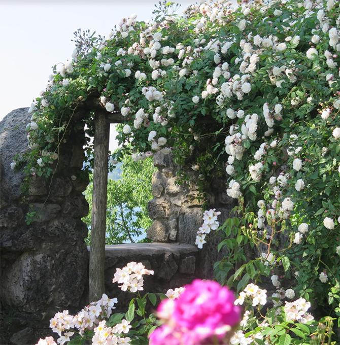 fioriture_roseto-rocca-bianche