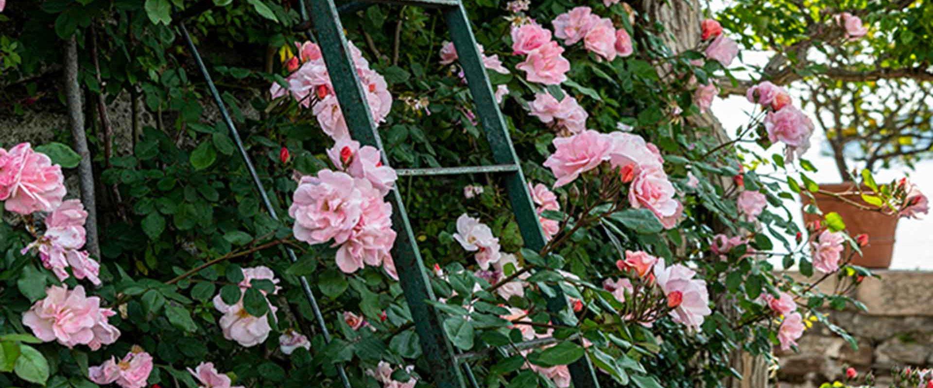 Calendrier des floraisons