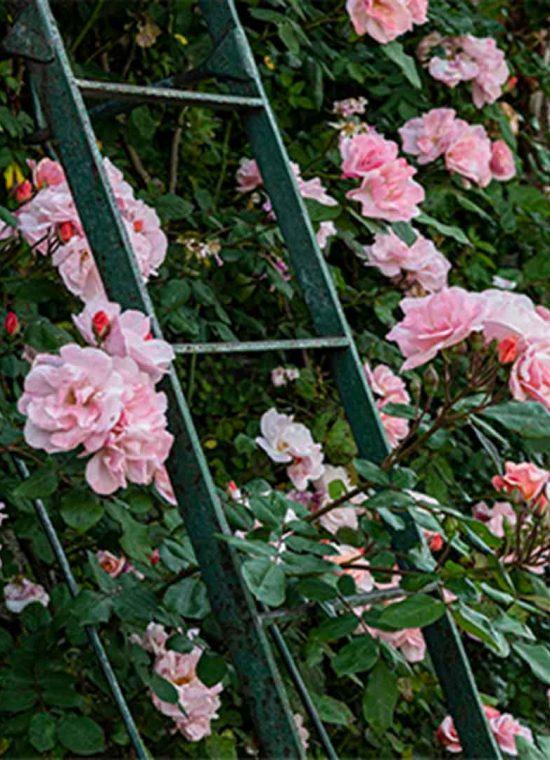 Calendar of blooms