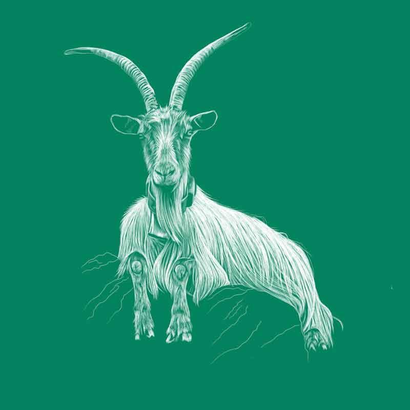 Orobica goat