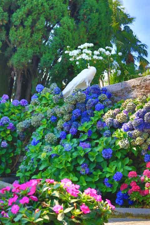 Giardino Barocco Isola Bella