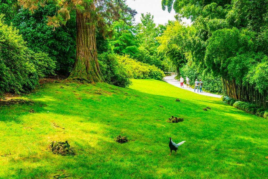 isola-madre-scorcio-giardini