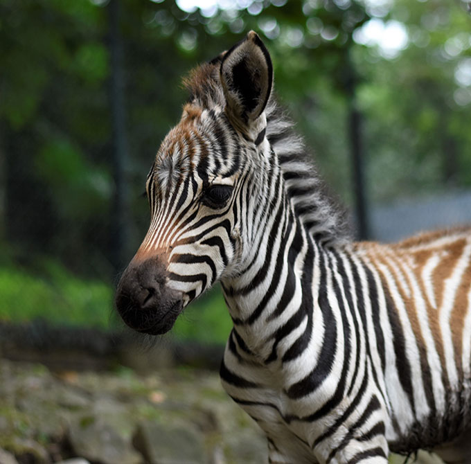 zebra-marina-dettaglio-gallery