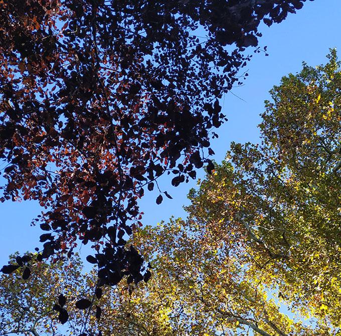 foliage-linea-parco-pallavicino