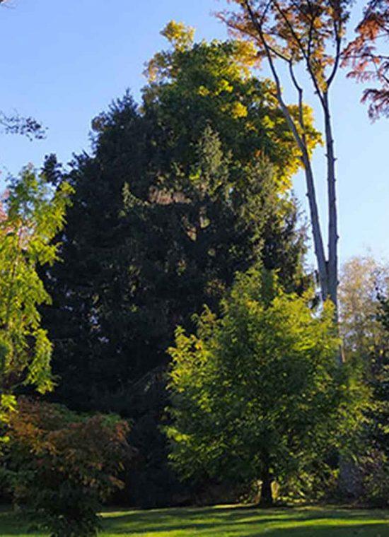 Foliage al Parco Pallavicino